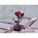 Долговечная роза в стеклянной колбе